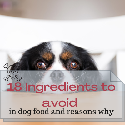 ingredients to avoid in dog food