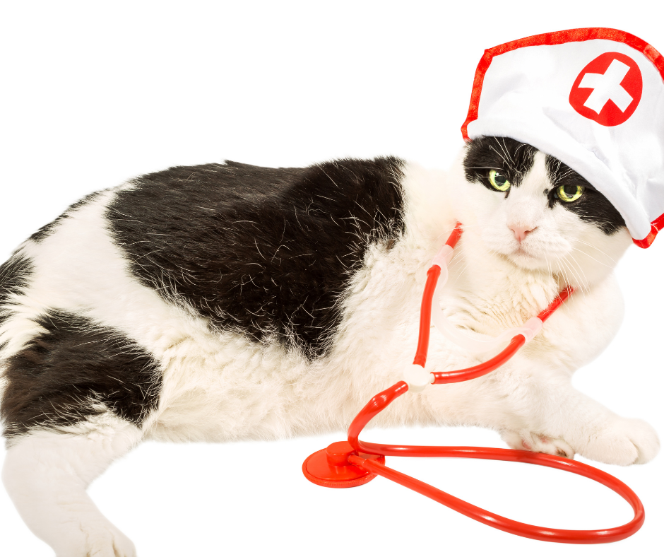 when should we take a cat to the vet