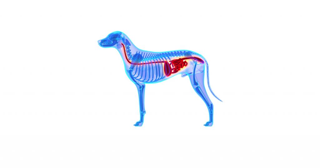 dog digestive system problems